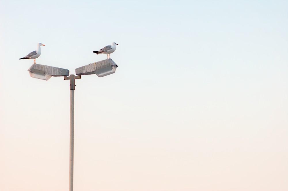 Resting seagulls
