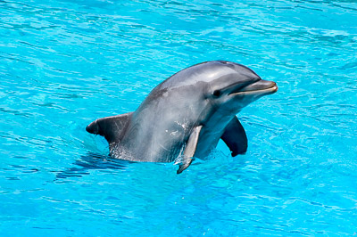 Dolphin swimming in a pool