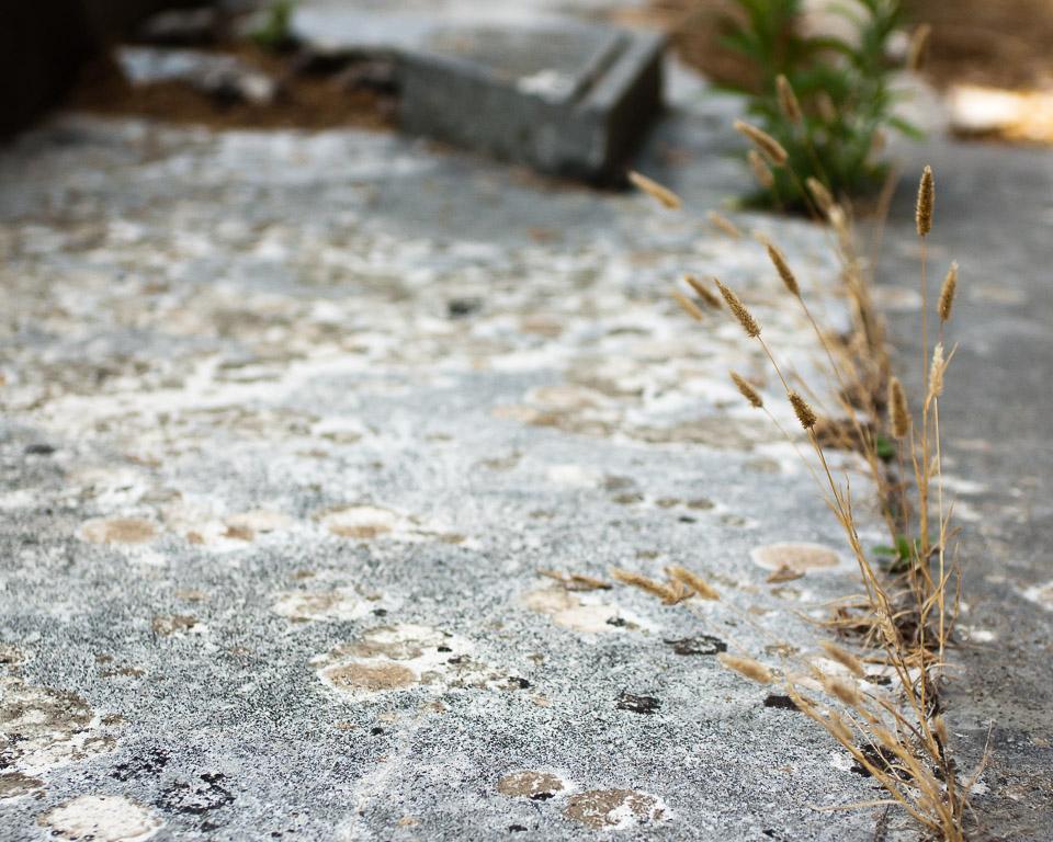 Grew on Rocks