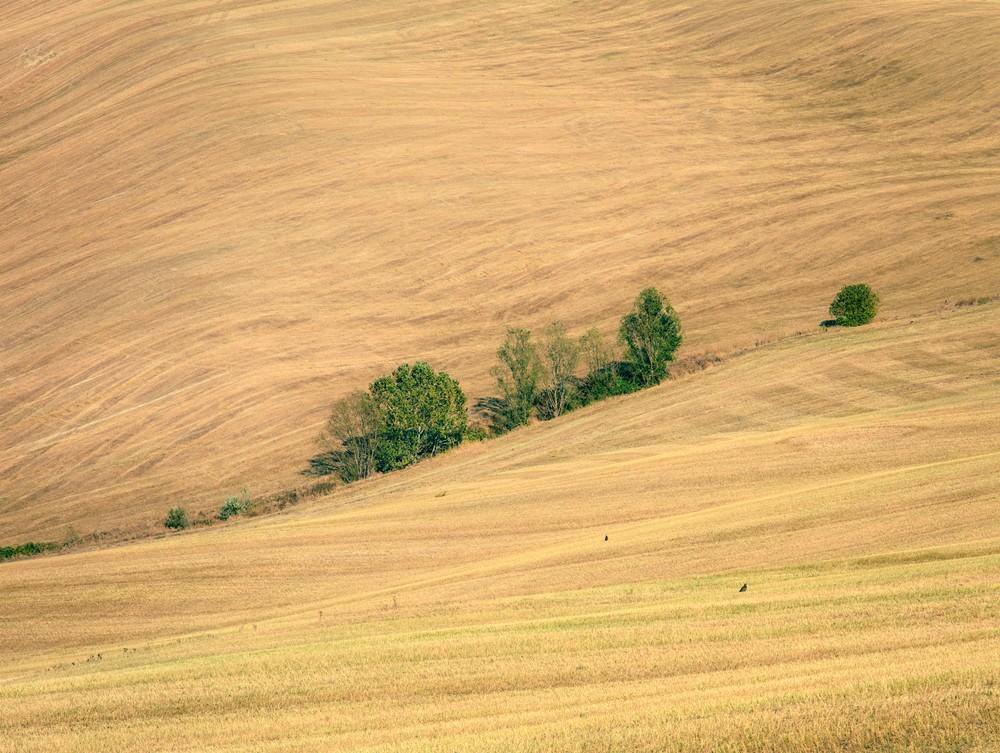 Threshed Field