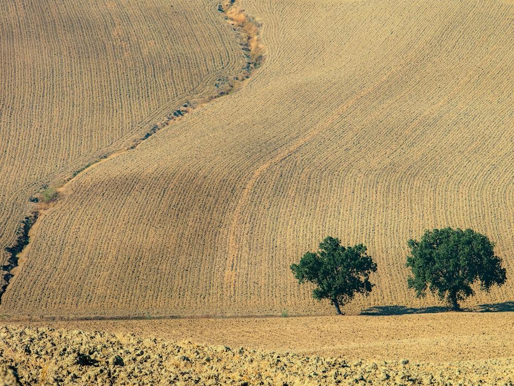 Plowed fields in the hills around Senigallia