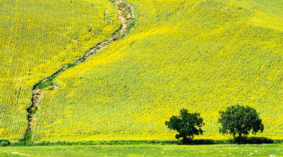 Two trees and a green hill