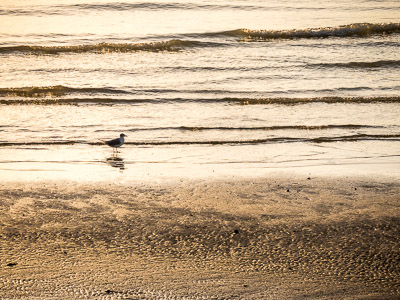 Seagull on the beach at dawn