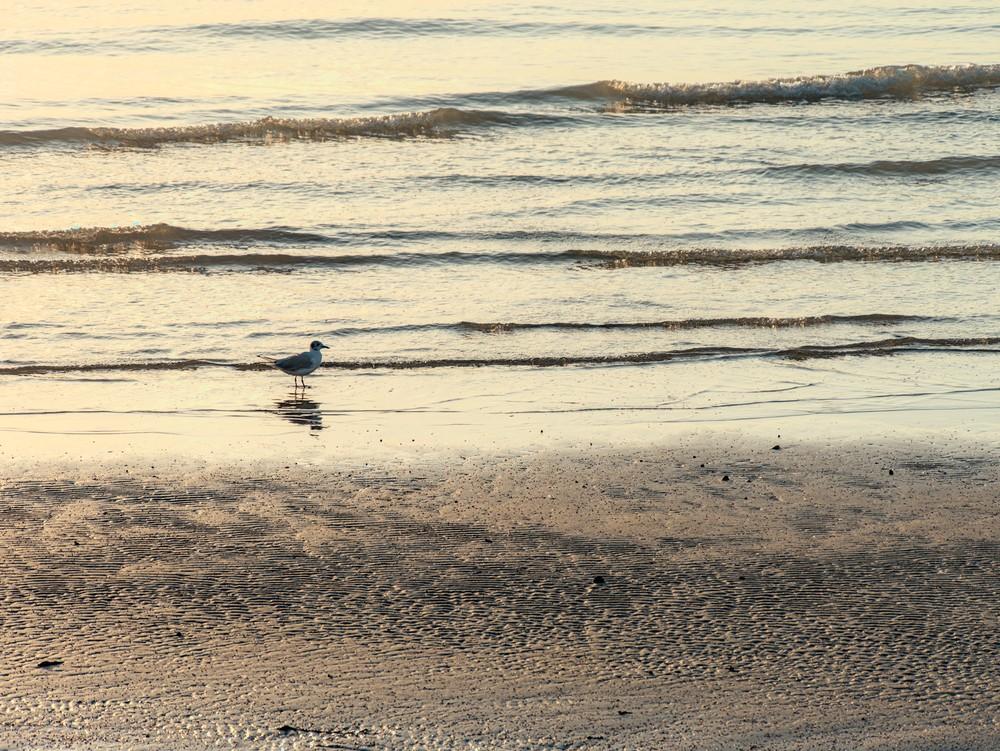 Seagull on the beach at dawn