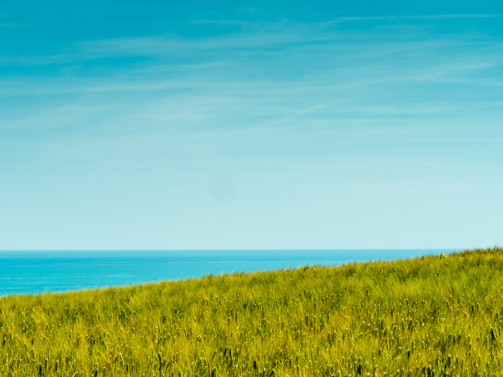 Green wheat field with a view on the sea