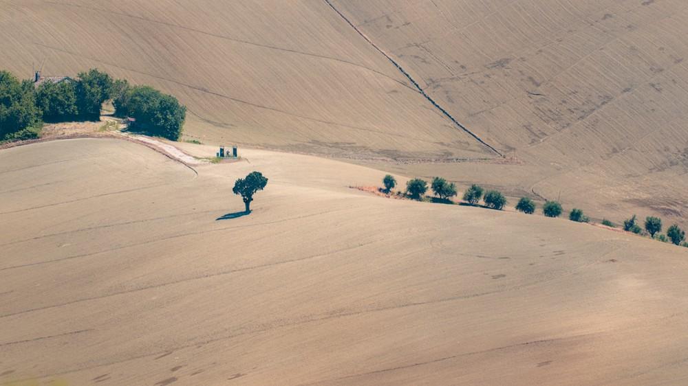 Trees in a plowed field